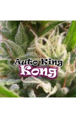 SEMILLA AUTO KING KONG DR.UNDERGROUND