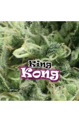 SEMILLA KING KONG DR.UNDERGROUND