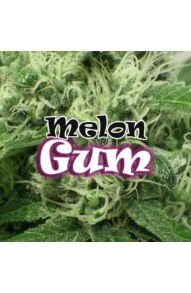 SEMILLA MELON GUM DR.UNDERGROUND
