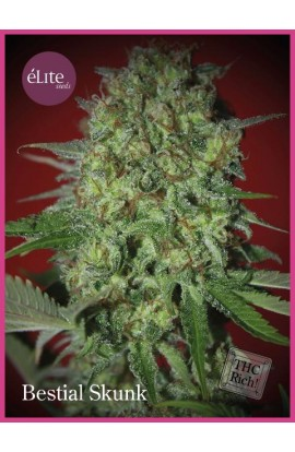 SEMILLA BESTIAL SKUNK ELITE SEEDS