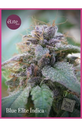 SEMILLA BLUE ELITE INDICA ELITE SEEDS