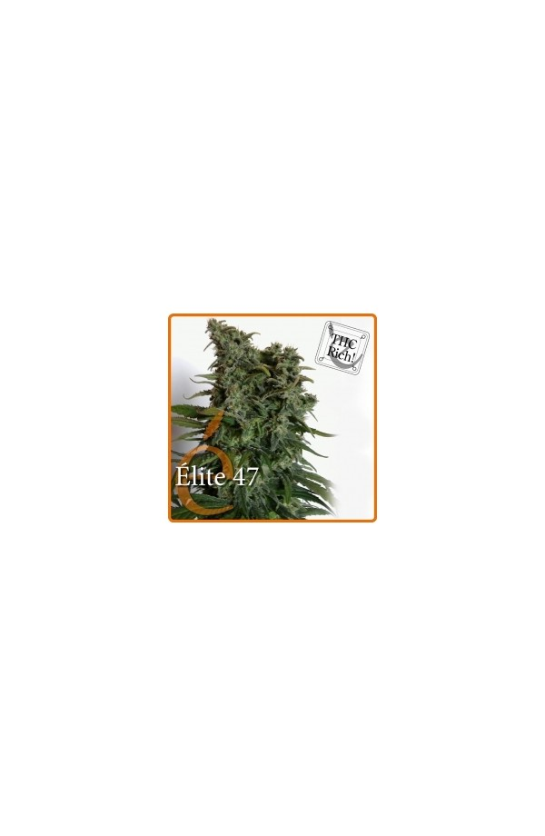 OREGON ELITE SEEDS - Cannarado Genetics Seeds