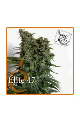 SEMILLA ÉLITE 47 ELITE SEEDS
