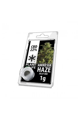 CBD SOLID AMNESIA HAZE EXTRACTION 22% PLANT OF LIFE 1GR