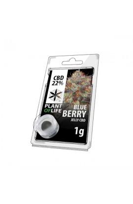 Jelly 22% CBD Blueberry Extraction 1G