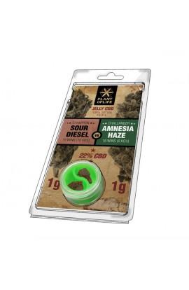 Jelly 22% CBD Amnesia vs SD Extraction 1G+1G