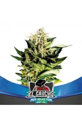 El Gaucho Faster Flowering